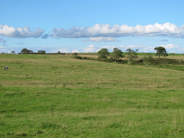 Rough pastures south of Watch Currock Farm