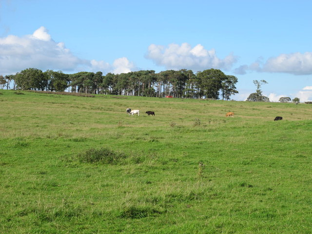 Rough pastures and plantation on Currick Hill