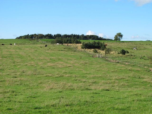 Rough pastures below Currick Hill
