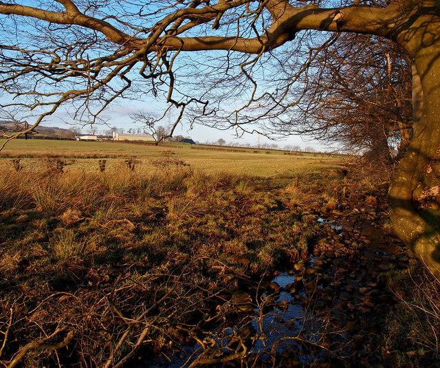 Unnamed burn, near Langstilly Farm