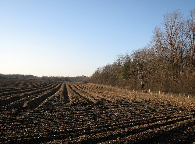 Stapleford: deep ploughing and old railway