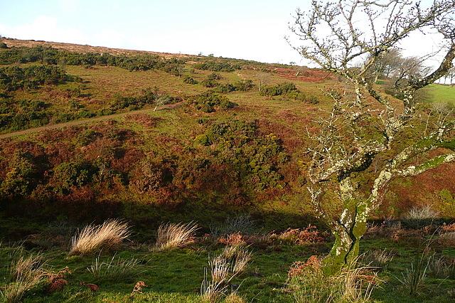 Across Bagley Combe