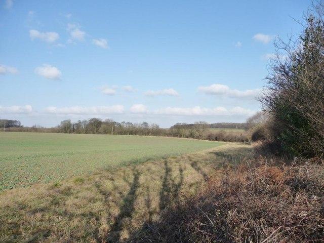 Shadows along a field edge