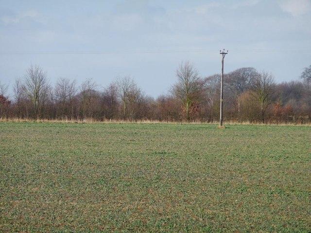 Telegraph pole in a crop field