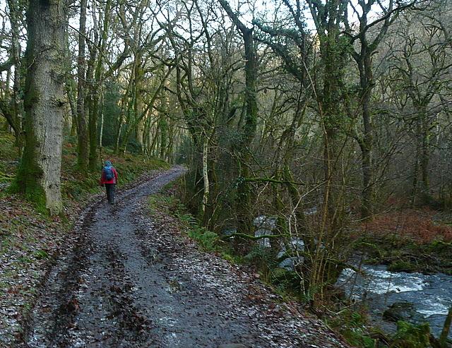 In Horner Wood