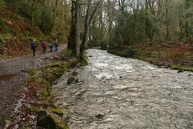 Path in Horner Wood