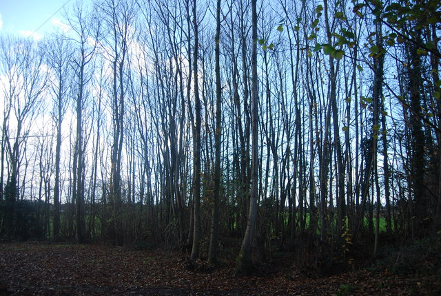 Woodland by the bridleway