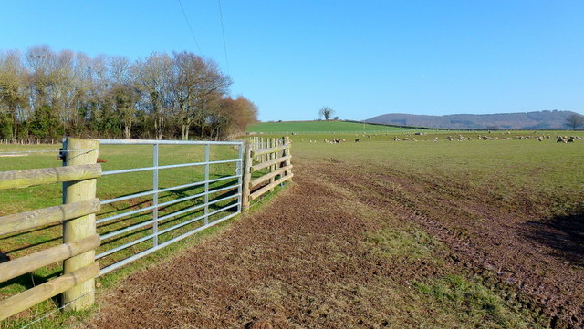 Sheep pasture and footpath