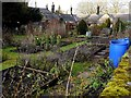 NZ0371 : Winter vegetable garden, Matfen by Andrew Curtis