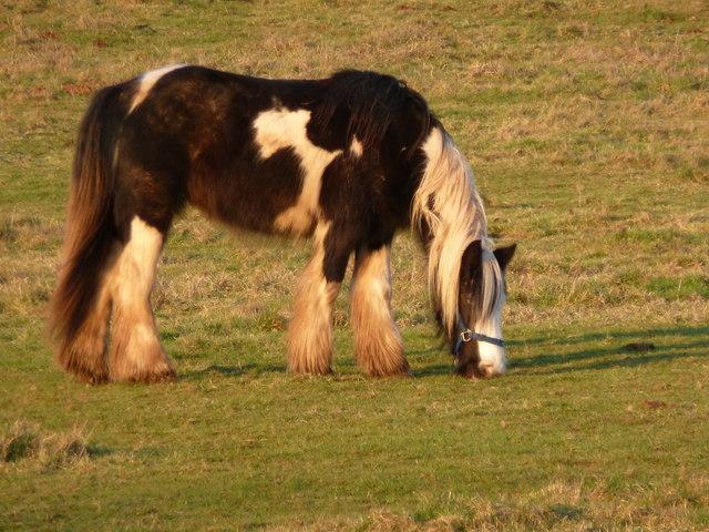 Resident of field, near Wilcrick