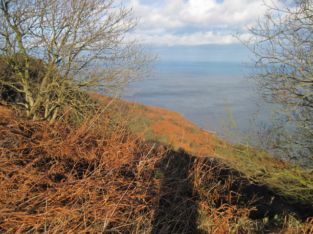 The  Undercliff  from  the  Cleveland  Way