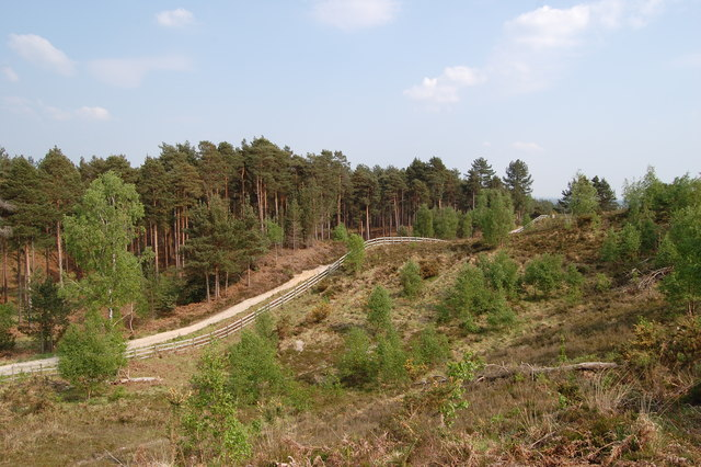 Track on the edge of Stevens Castle Verwood