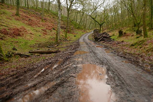 Track in Shillett Wood