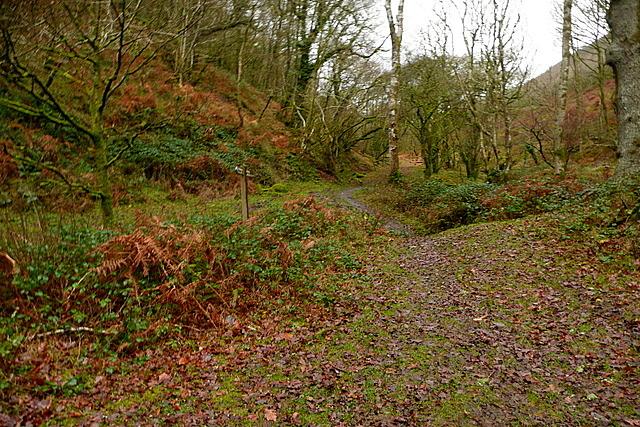 Bridleway in Shillett Wood