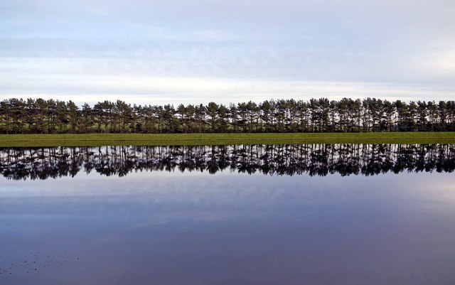 Trees at Whittle Dene Reservoir