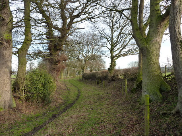 Venerable oaks lining the bridleway to Moat Hall