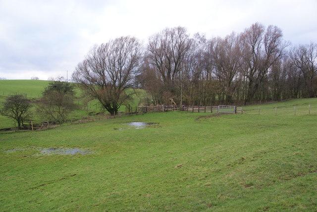 Soggy fields by Great Meadow Plantation