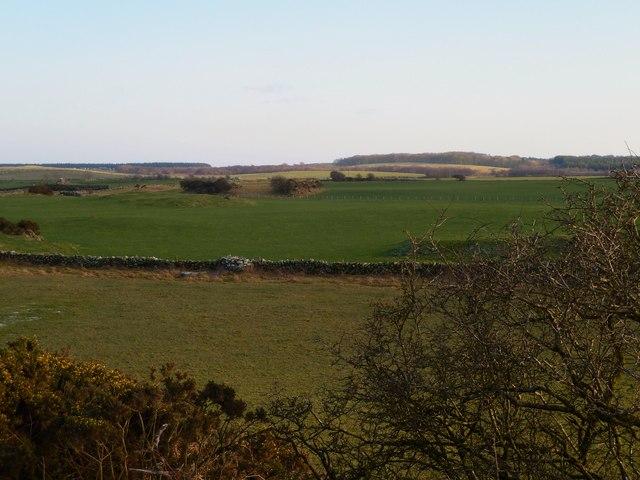 Balcraig Moor