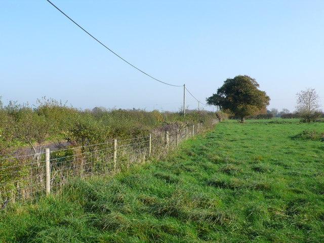 Fields near Winterborne Kingston