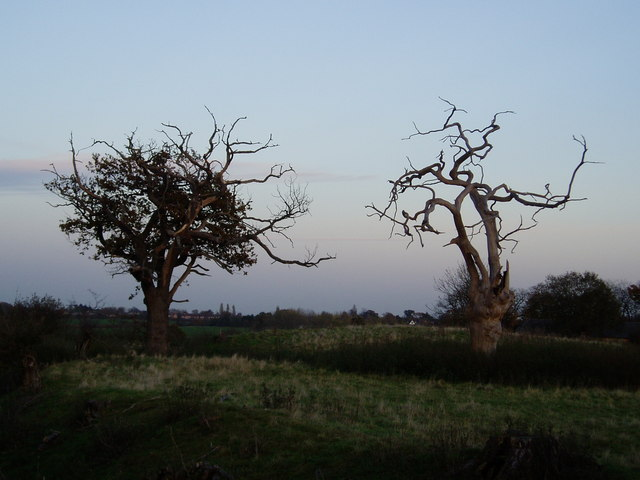 Trees on the site of Denham Castle, Suffolk