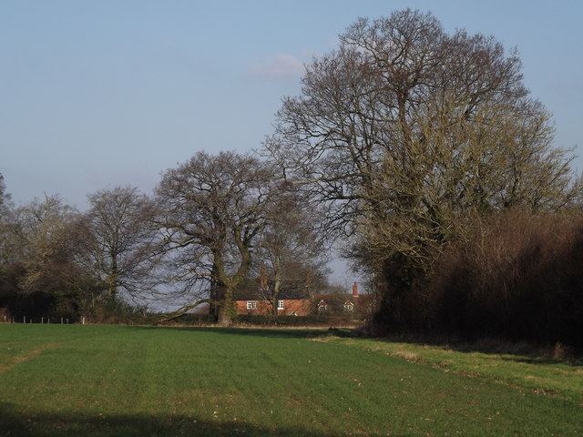 Downland Near Beech
