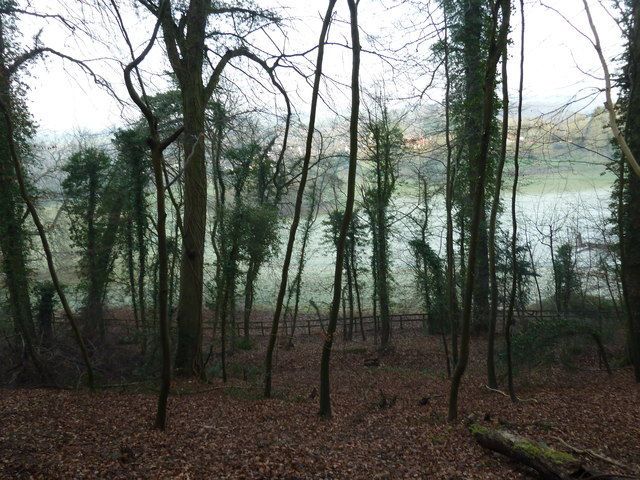 Spindly trees on Zig Zag Hill
