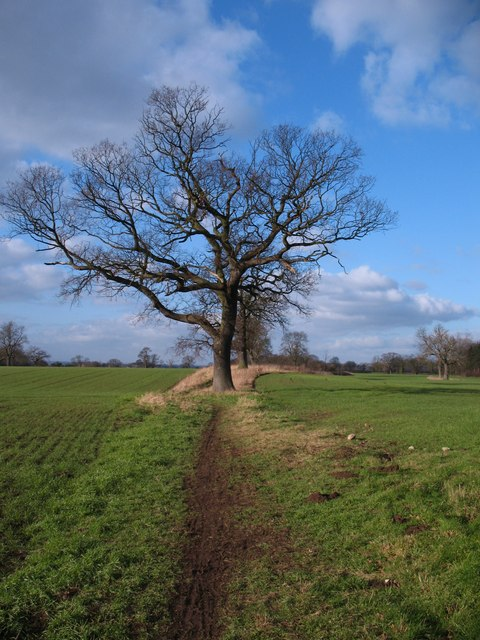 Bridleway at War Fields