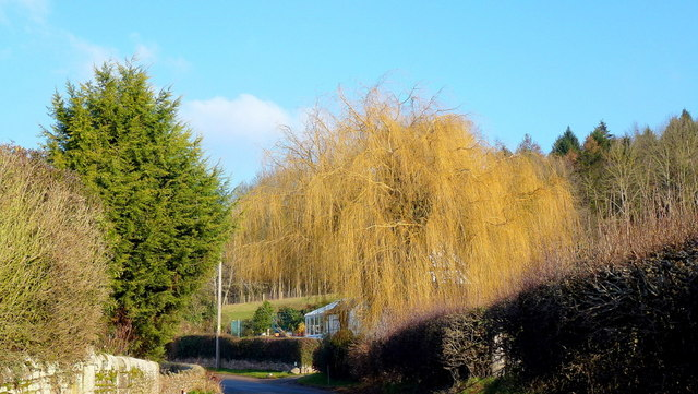 Winter gold at Mansell Gamage