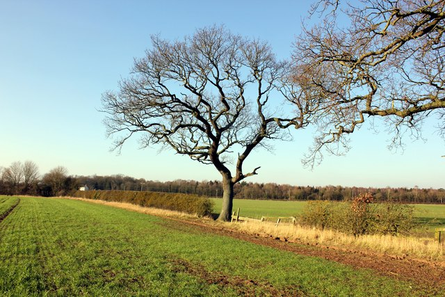 Field and Hedgerow at Lea Newbold