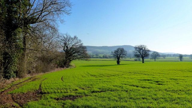 View to Burton Hill