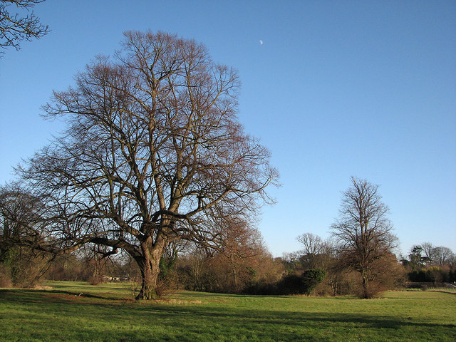 Pampisford: moon and moat