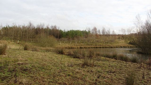 Young woodland