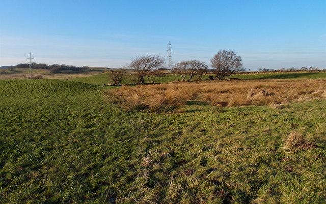 Moorland, Barnaigh Hill