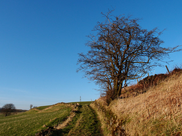 Hawthorn Tree and Track