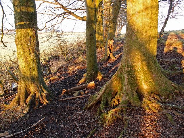 Woods near Nervelstone