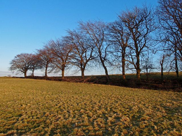 Trees near Nervelstone