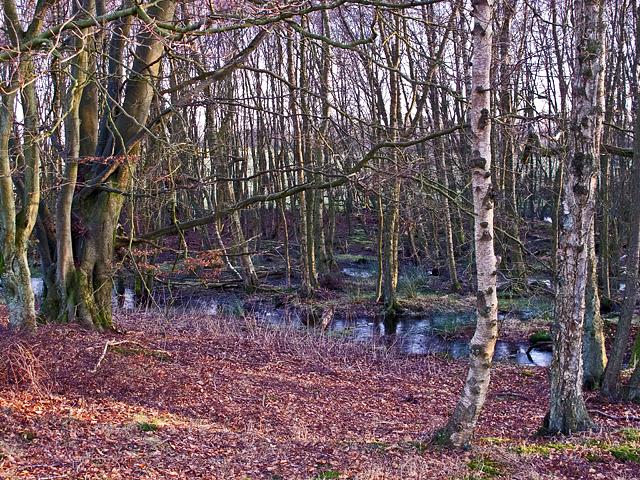 Birchwood near Cadgerford