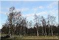 NS9792 : Birchwood near Piperpool by William Starkey