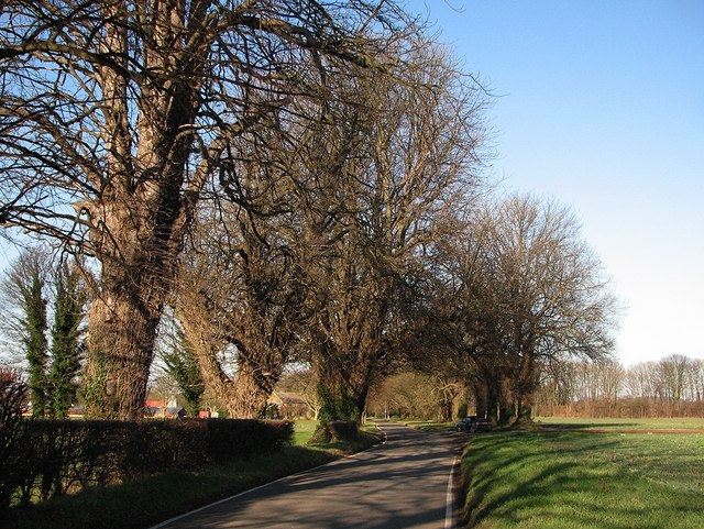 The road to Babraham
