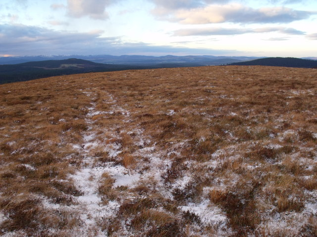 Track crossing area of tufty grasses on the north shoulder of An Lurg near Glenmore