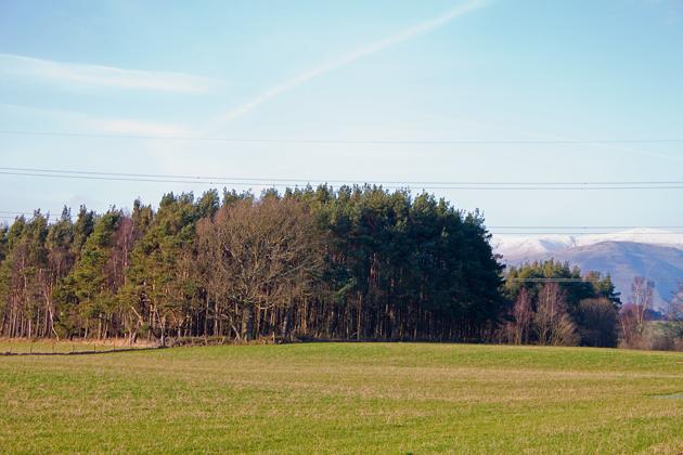Forestry plantation near Gartlove