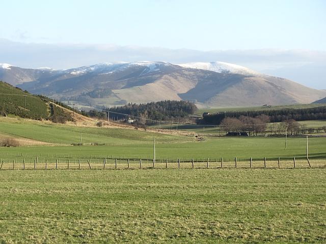 Grassland, Blendewing