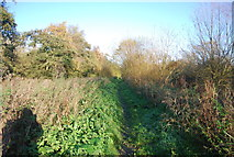 TR1859 : Footpath, north bank of the Great Stour by N Chadwick