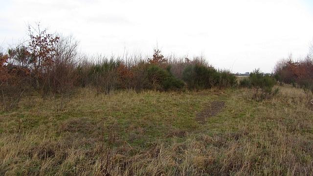 Woodland, Macmerry