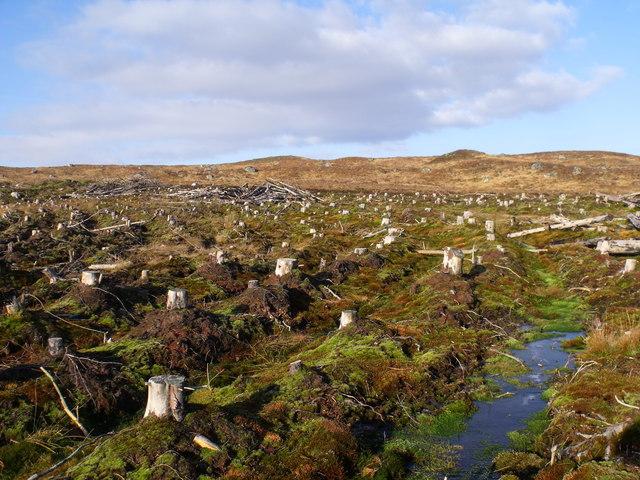 North edge of clear-felled plantation on Rannoch Moor
