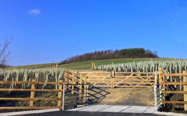 New tree planting on the former Darfield Colliery 'muck stack'