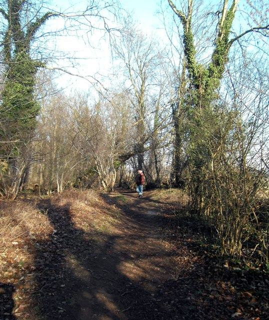 Bridlepath through Newfield plantation at  Fairburn Yorkshire