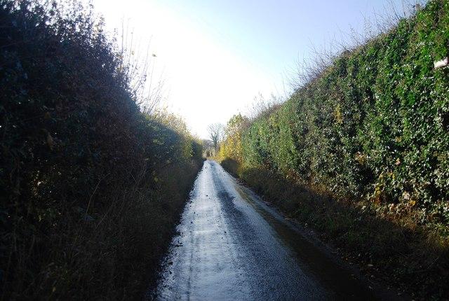 High hedges, Wilson's Lane