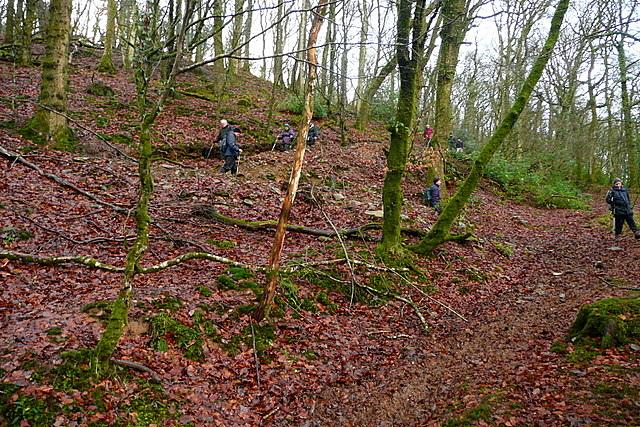 Bridleway in Blagdon Wood