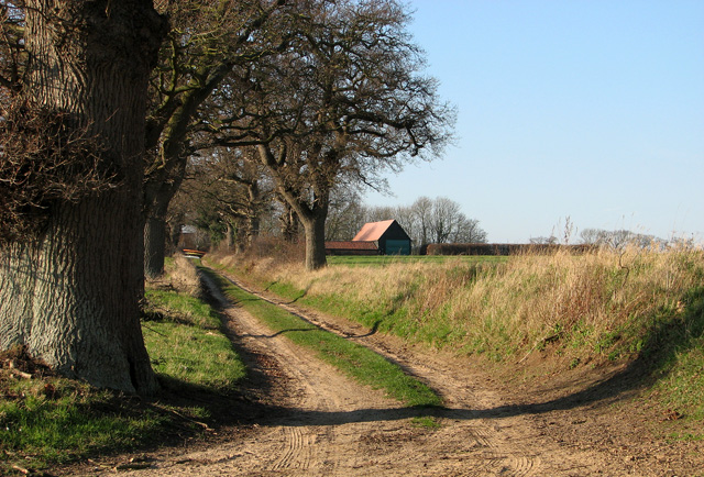 Track to Bugs Barn Farm, Little Glemham